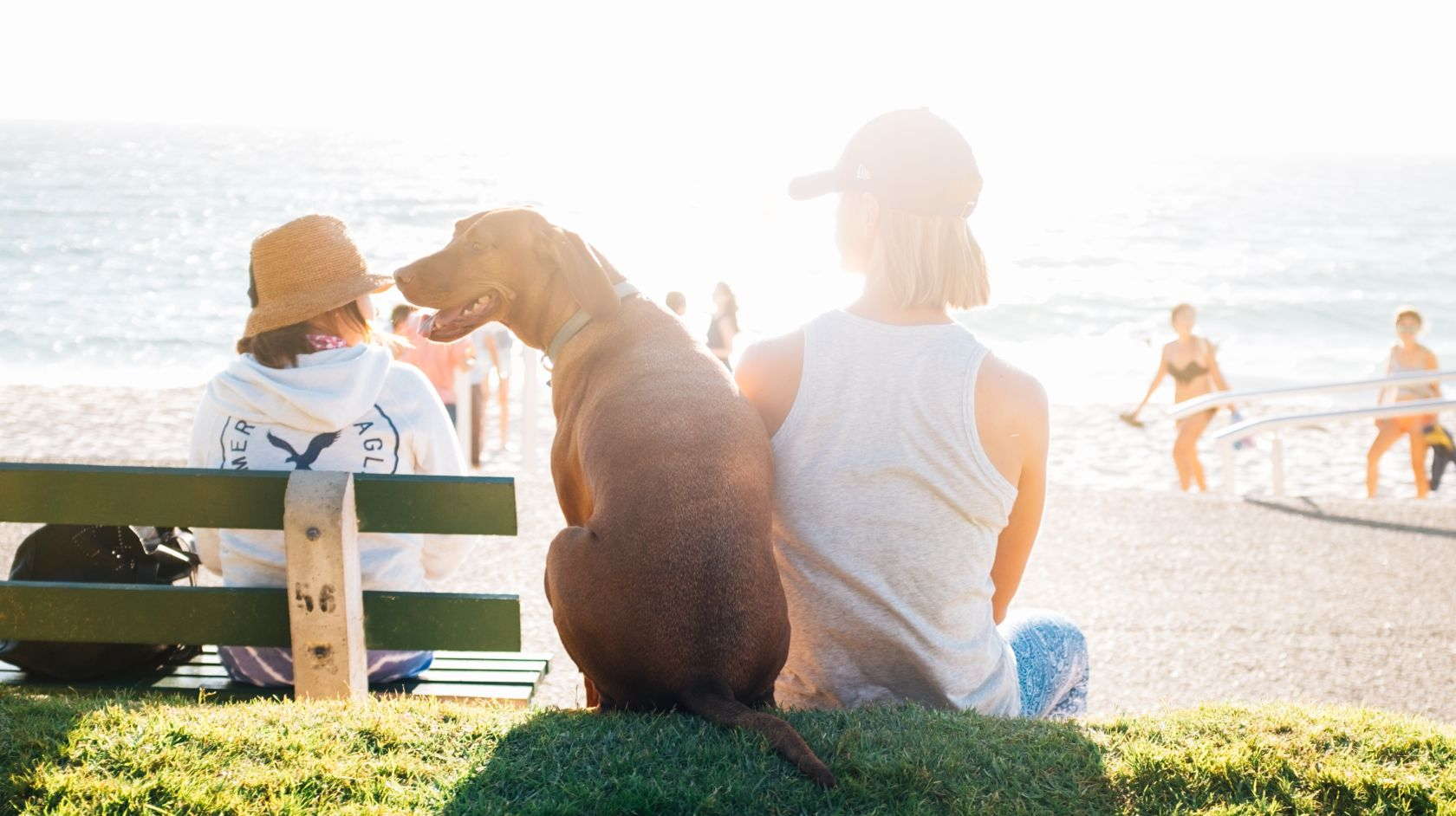 Dog and woman sitting overlooking the beach in Los Osos, California